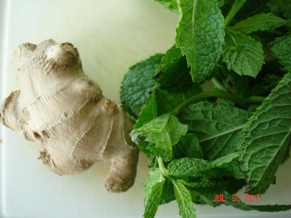 Jamaican mint-ginger tea (1/2)